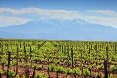 Cazes estate vignoble biodynamie Bio Français vin wine