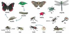 Learning about insects English lesson