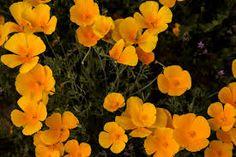 beautiful blooms - Google Search