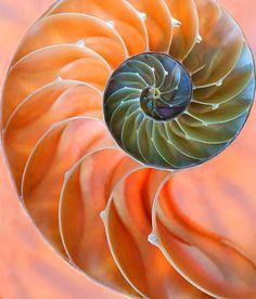 Whirls and Swirls by Nick Lagos