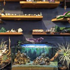 Nano aquarium 40x20x20cm aquascaped w/ dragon stone, extra large duckweed (lemna minor) and silica sand • Dragon taşı, büyük boy su mercimeği ve silis kumu ile tasarlanmış 40x20x20cm nano akvaryum ⚜#aquascaping #nano #nanoaquarium #dragonstone #silicasand #lemnaminor #duckweed #amethyst #airplant #tillandsia #pyrite #malachite #pandul #labradorite #mangrove #shop #localshop #dükkan #bekleriz #moda #kadıköy #sutopya
