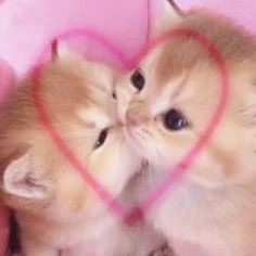 Cute Baby Cats, Cute Little Animals, Kittens Cutest, Cute Babies, Cute Kitty, Photo Chat, Cat Aesthetic, Pretty Cats, Cute Icons
