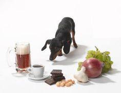 alimentos e medicamentos tóxicos pra cães e gatos