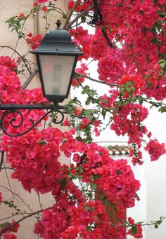Pretty flowers in the backstreets of Skiathos