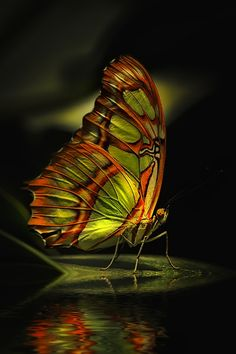 butterflies, Beautiful, yet they are free to go where they want or need, I wish I could Free not Just in my mind :)