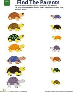 This worksheet tests kids' understanding of basic heredity by asking them to match parent turtles with their offspring based on similar traits. 1st Grade Science, Kindergarten Science, Preschool Curriculum, Teaching Science, Teaching Kids, April Preschool, Primary Science, Homeschool, Science Worksheets