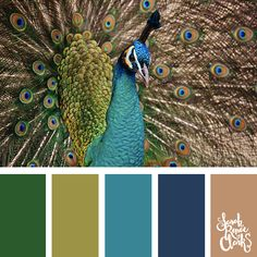 25 Color Palettes Inspired by the Pantone Fall 2017 Color Trends Peacock Color Scheme, Peacock Colors, Colour Pallete, Colour Schemes, Color Trends, Color Palettes, Color Combinations, Peacock Feathers, Fall Color Palette
