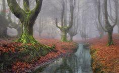 15 florestas mágicas que você não se importaria em se perder