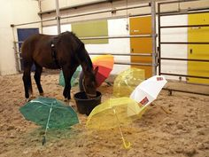 Encouraging a horse to approach a scary object led to less stress when faced with the same situation later on.