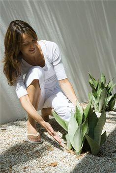 Plantas con receta.  http://www.farmaciafrancesa.com/main.asp?Familia=189&Subfamilia=223&cerca=familia&pag=1