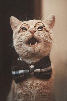 Professor Tom Foolery.... Very handsome cat in glasses :)