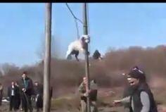 In diesem Video aus Bulgarien werden HundeausTradition gequält... so steht es zu mindestens unter dem Video...  Welche Art von Tradition kann es geben in der man gewissenlos hilfloseTiere quält?  Ich bin mal wieder vollkommen schockiert von diesen Bildern und unglaublich wütend... was bilden