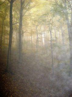 seeking the sun  ..on a misty morning.