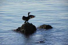 Opatija Bald Eagle, Animals, Rain, Simple, Nice Asses, Animales, Animaux, Animal, Animais