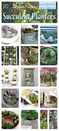 Love succulents <3 You don't need a green thumb!! 30 Sensational Succulent Planters