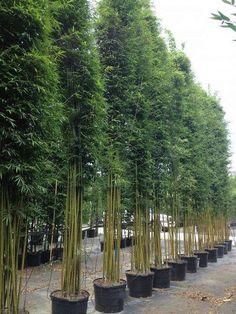 8 Healthy Tips AND Tricks: Backyard Garden Layout Water Features landscape garden ideas modern. Bamboo Landscape, Landscape Design, Back Gardens, Outdoor Gardens, Indoor Garden, Potted Garden, Garden Trellis, Balcony Garden, Garden Art