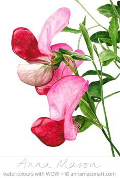 These super Sweet Peas are now available as a tutorial in my Online School http://annamasonart.com/online-school