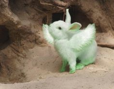 Real Life Flying Mint Bunny :-)