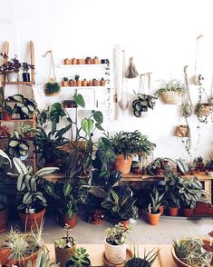 I would love to introduce this wonderful hashtag #indoorgardener ~ I adore my plants at home & in the shop  I am no expert & I am learning…
