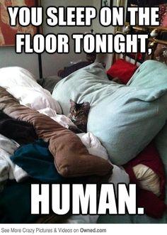 You sleep on the floor tonight Human.