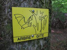 Domaine de Trévarez - Saint-Goazec   Finistère Bretagne