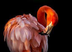 Afternoon glow flamingo от Don Nguyen
