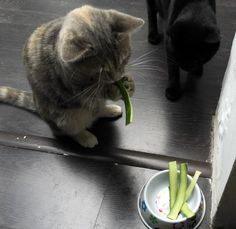 Zucchini cat... So random and weird ... But then again I could see my cat doing this, too!