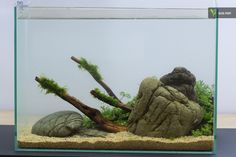 19 Liter Nano Tank, 1 Day old  #aquascaping #freshwater #oleg