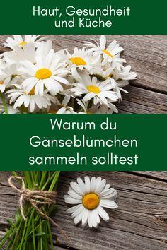 Mit dem Gänseblümchen verwöhnt uns die Natur mit einem echten Blockbuster. Lass dich überraschen, was die zarten weiß-gelben Blüten alles können und wie du die Vorteile der Gänseblümchen für deine Gesundheit und Schönheit nutzen kannst. #gänseblümchen #rezeptemitgänseblümchen #gänseblümchentinkturanwendung #gänseblümchenrezepte #gänseblümchentinktur #gänseblümchensalbe Bellis Perennis, Homemade Cosmetics, Yoga, Plants, Diy, Beauty, Herbs For Health, Home Health Remedies, Health And Wellness