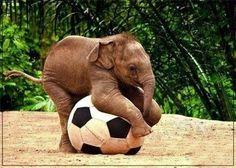 自然の赤ちゃん象サイズのサッカーボールを発生する驚くべき発見後の最初の日。