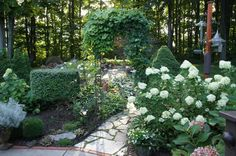 sweet autumn clematis and hydrangeas - Google Search