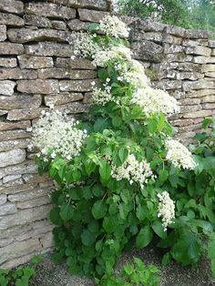 Fragrance | Pinterest | Hydrangea, Gate and Gardens