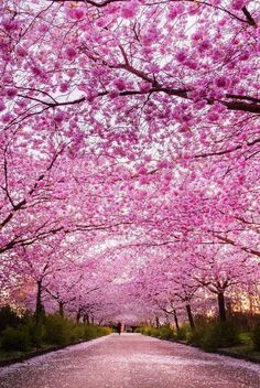 Funterest is the world of funny, interesting, amazing images and clips: Nature in Pink Color