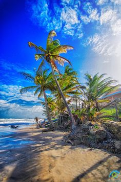 Unique All Over Nature, Landscapes Prints: www.shop Unique All Over Nature, Landscapes Prints: www. Tropical Beach Resorts, Tropical Beach Houses, Beautiful Islands, Beautiful Beaches, Trinidad E Tobago, Romantic Beach Photos, Best Beach In Florida, Beach Pink, Jamaica Vacation