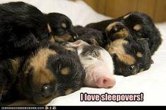 I love sleepovers