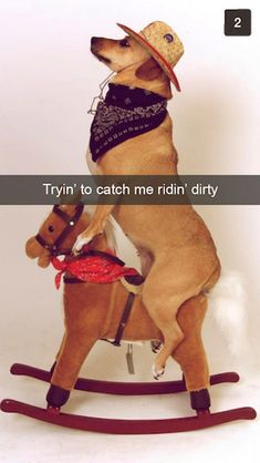 Snapchats from Your Dog | ViraLuck
