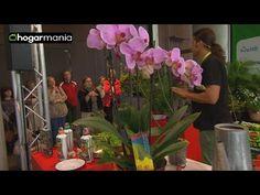 Cuidados de la orquídea: el riego y la poda - YouTube