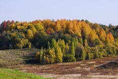 Autumn forest by Alexander Polomodov on 500px