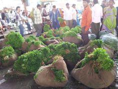 Source point : Vegetable waste genration