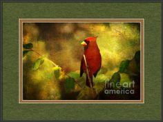 Cheery Red Cardinal  Framed Print By Lianne Schneider
