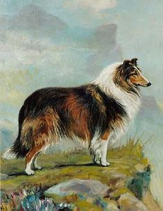 Artist: F.T. Daws. Because it is a Collie....