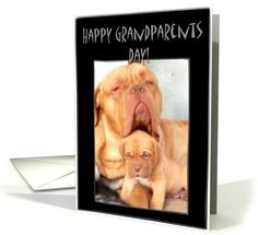 General Grandparents Day Cards from Greeting Card Universe Grandparents Day Cards, How Big Is Baby, Greeting Cards, French, Sayings, Happy, Dogue De Bordeaux, French People, Lyrics