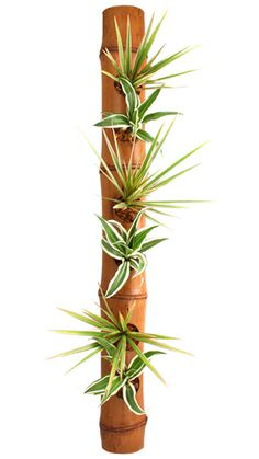 Vegetal Table Tones on Tones Bamboo Planter, Bamboo Garden, Freshers Day, Bamboo Crafts, Air Plants, Succulents, Diy Crafts, Linguine, Decorating Ideas