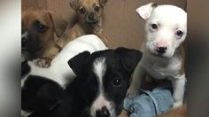 Six abandoned puppies found in a sealed box on the side of the road are looking for their forever homes. Meteorologist Kait Parker explains.