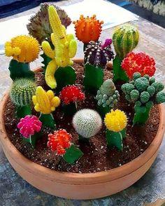Succulents garden 861806078675499766 - Succulent/Cactus lover % Cacti x 16 😍❤ .succulents – Liketogirls Source by liketogirls Mini Cactus Garden, Cactus House Plants, Succulent Gardening, Succulent Terrarium, Cactus Flower, Garden Plants, Succulent Ideas, Cactus With Flowers, Terrarium Ideas