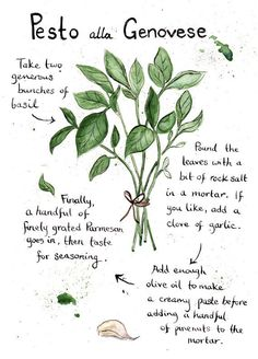 Pesto alla Genovese Ilustrated Recipe by emikodavies Fruit Recipes, Cooking Recipes, Budget Recipes, Yummy Recipes, Yummy Food, Healthy Recipes, Peach Chutney, Recipe Drawing, Dressings
