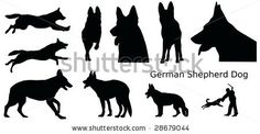 various silhouettes of a German Shepherd Dog, vector illustration by Claudia Steininger, via Shutterstock
