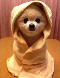 Shunsuke..Omg, I want one now