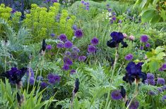 My Favorite Plant Combinations 36