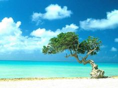 The most beautiful white sand beaches ~ Aruba
